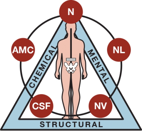 applied kinesiology Applied kinesiology and chiropractic center, clearwater, florida 364 likes 31 talking about this 180 were here comprehensive alternative health and.